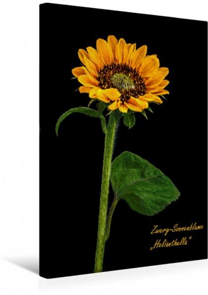 Wandbild Florale Schönheiten im Rampenlicht - Oil Painting Style Zwerg-Sonnenblume Helianthella Zwerg-Sonnenblume Helianthella
