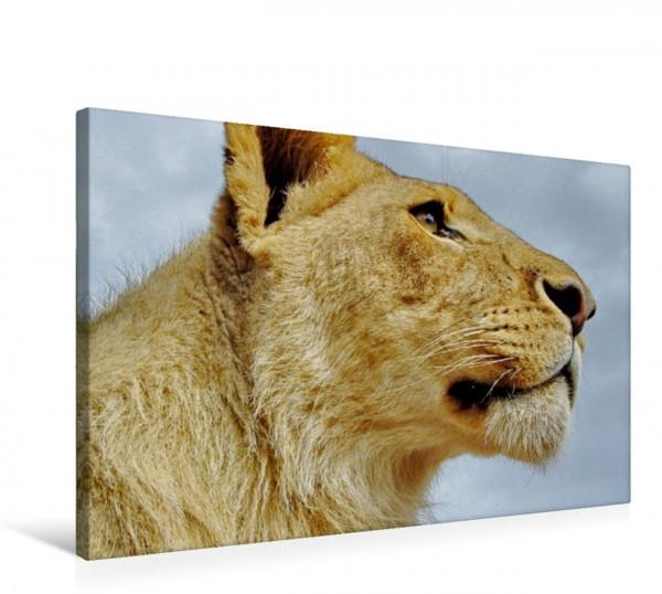 Wandbild Junger Löwe