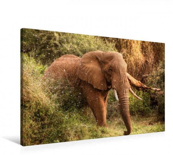 Wandbild Elefant in der Zentral-Serengeti