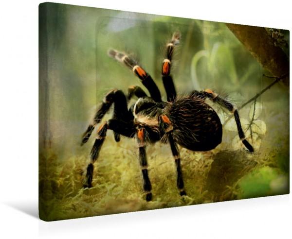 Wandbild Vogelspinne Spinnen Spinnen