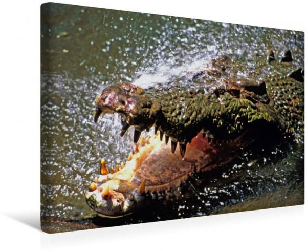 Wandbild Salzwasserkrokodil, Wildworld, Townsend, Queensland