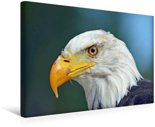 Wandbild König der Lüfte Weißkopfseeadler Majestätischer Jäger der Lüfte Majestätischer Jäger der Lüfte
