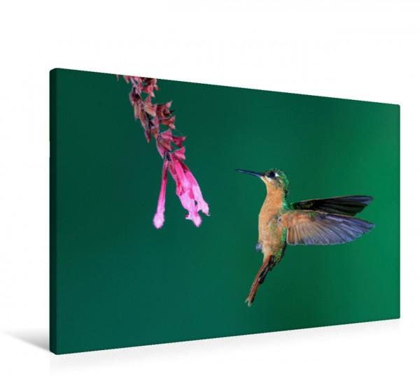Wandbild Rubinkolibri