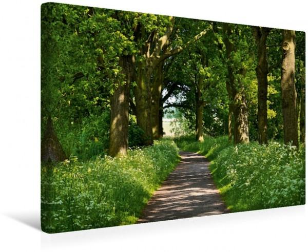 Wandbild Unter Bäumen Weg in Flandern Weg in Flandern