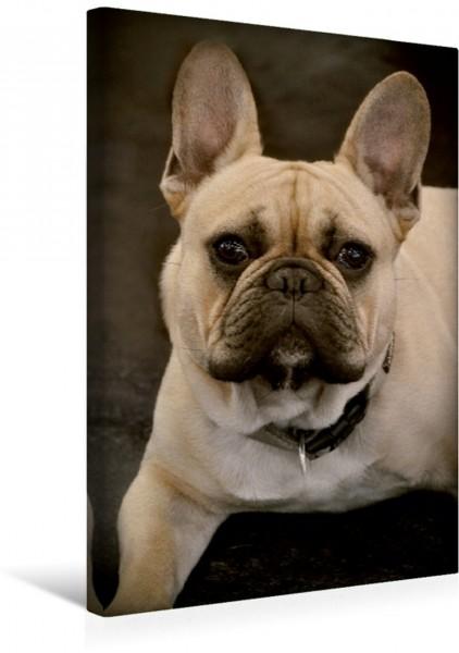 Wandbild Französische Bulldogge