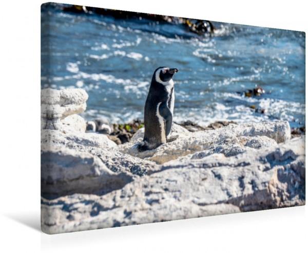Wandbild Pinguin am Boulders Beach