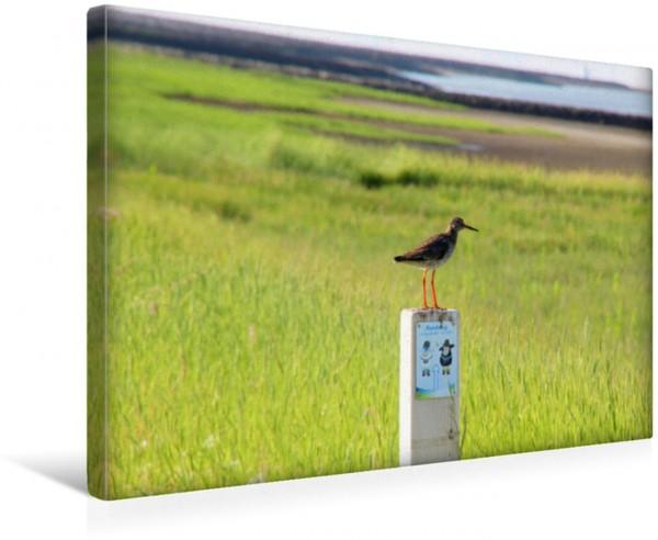 Wandbild Ein Rotschenkel im Deichvorland Vogelbeobachtung im Nationalpark Niedersächsisches Wattenmeer Vogelbeobachtung im Nationalpark Niedersächsisches Wattenmeer