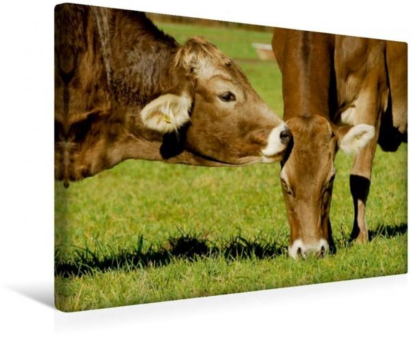 Wandbild Ein Herz für Rinder