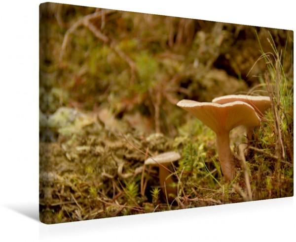 Wandbild Stille Welt Waldboden Lamellen Pilz Lamellen Pilz
