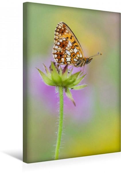 Wandbild Braunfleckiger-Perlmutterfalter Schmetterling Boloria selene Schmetterling Boloria selene