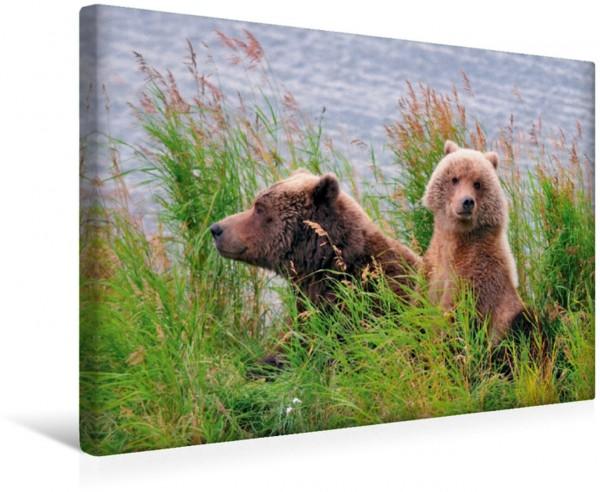 Wandbild Braunbär mit Nachwuchs in Alaska Kukak Bay / Katmai Natl. Park / Alaska Kukak Bay / Katmai Natl. Park / Alaska