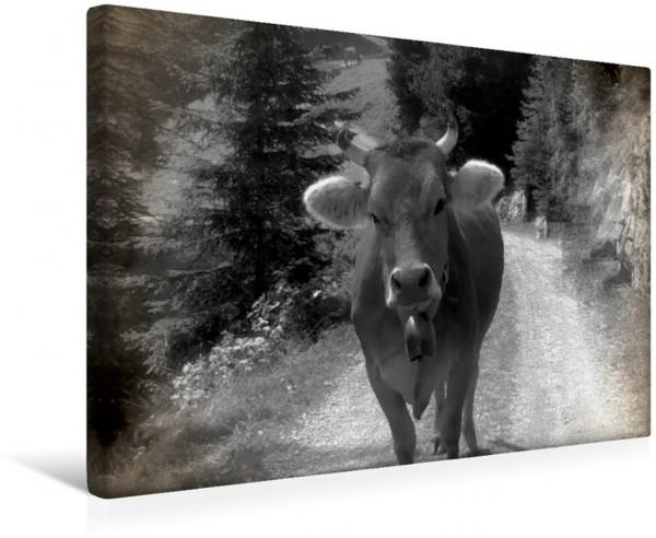 Wandbild Kuh Weg Nutztiere in den Schweizer Alpen in nostalgischen schwarz und weiß Nutztiere in den Schweizer Alpen in nostalgischen schwarz und weiß