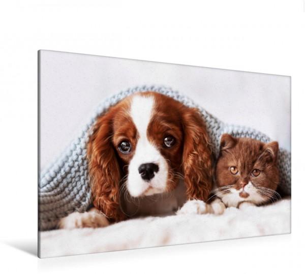 Wandbild Best Friends - BKH Kitten und Cavalier King Charles Spaniel Welpe