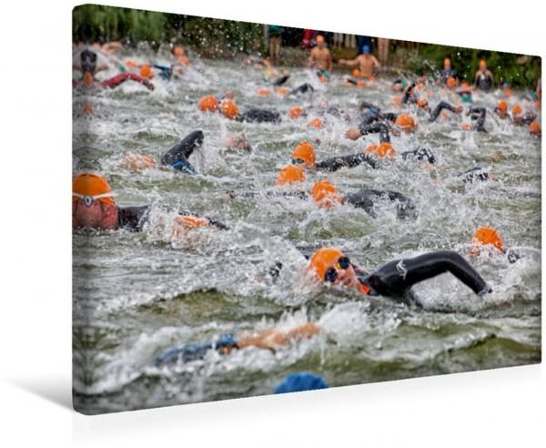 Wandbild Schwimmen im Main beim Kitzinger Mainfrankentriathlon Triathlon Schwimmen Triathlon Schwimmen