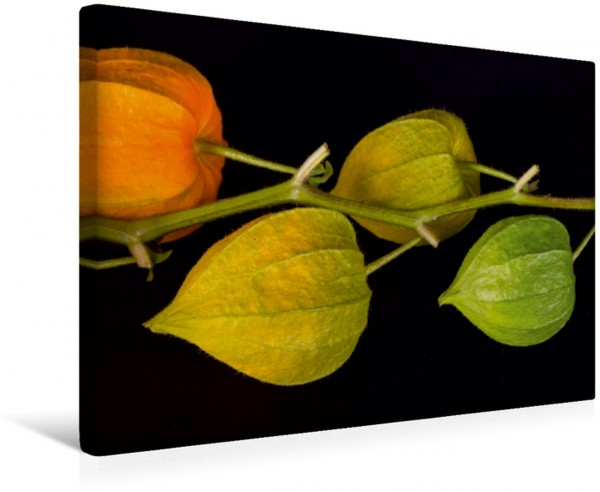 Wandbild Emotionale Momente: Physalis. CH-Version